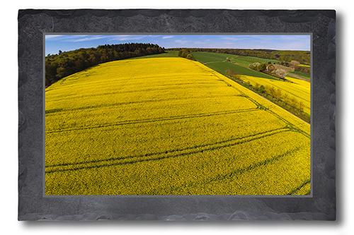 Das Gelb des Frühlings