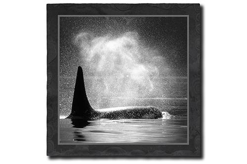 Orca bläst