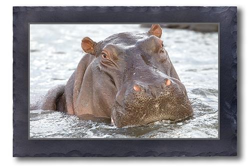 Hippo-Portrait