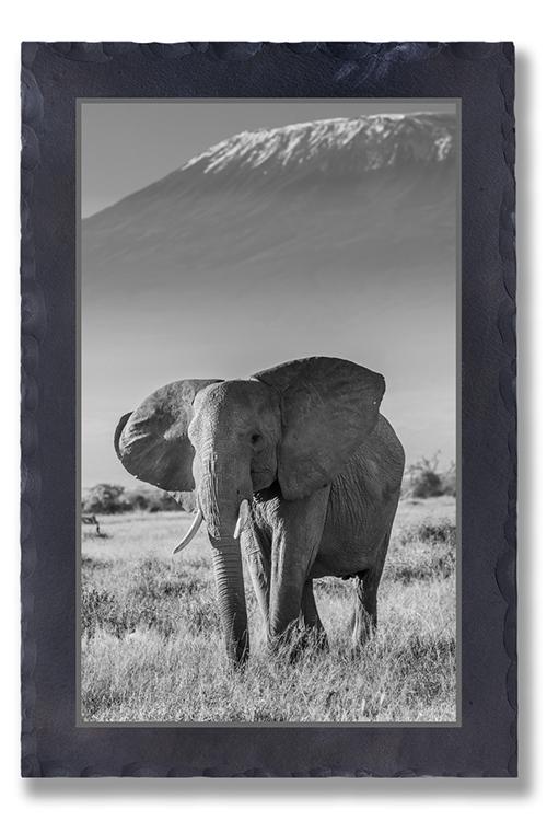 Grauer Riese am Kilimandscharo
