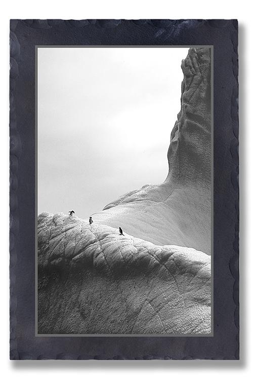 Eisberg Pinguine