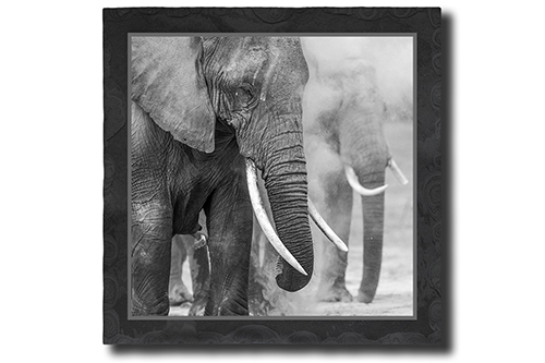 Elefanten im Staub