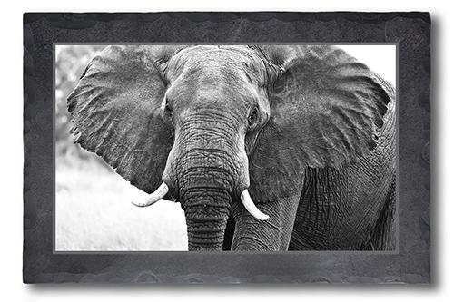 Elefanten Portrait