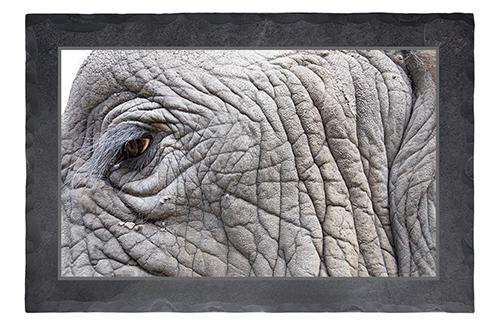 Elefantenauge Rechteck