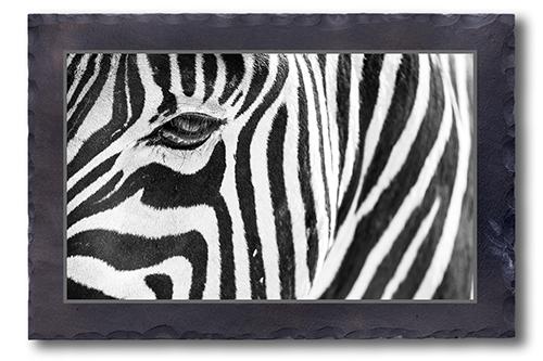 Mit dem Zebra Auge in Auge
