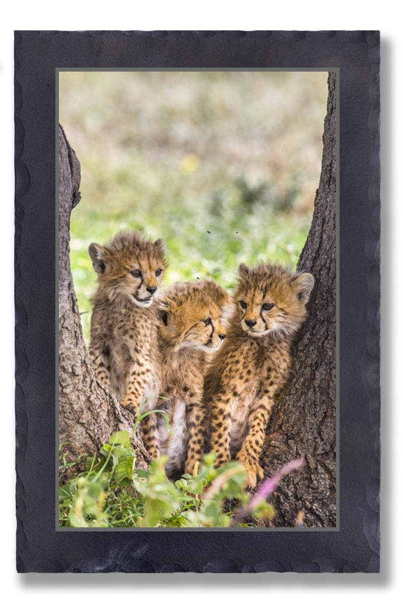 Cheeta Siblings