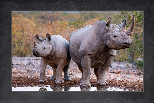 Nashörner - Mutter mit Kind
